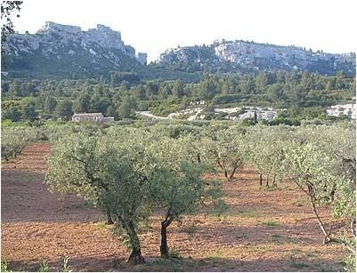 Surrounding Countryside - Saint Remy de Provence